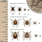 Strategies For Tick Prevention and Maintenance