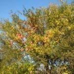 My Favourite Season … Fall