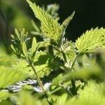 A Head-Start to Allergy Season