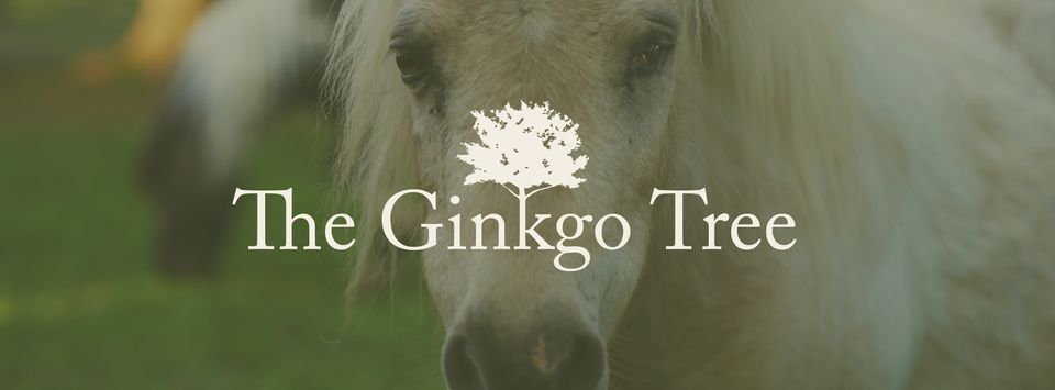 The Ginkgo Tree Slide 2